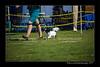 DSC_0724-12x18-06_2014-DogShow-W
