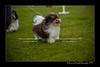 DSC_5485-12x18-07_2014-Dog_Show-W