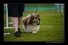 DSC_5472-12x18-07_2014-Dog_Show-W