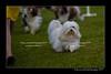 DSC_5483-12x18-07_2014-Dog_Show-W