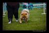 DSC_5570-12x18-07_2014-Dog_Show-W