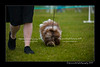 DSC_5475-12x18-07_2014-Dog_Show-W