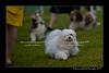 DSC_5482-12x18-07_2014-Dog_Show-W