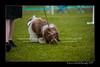 DSC_5474-12x18-07_2014-Dog_Show-W