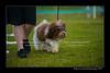 DSC_5473-12x18-07_2014-Dog_Show-W