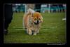 DSC_5575-12x18-07_2014-Dog_Show-W