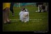 DSC_5481-12x18-07_2014-Dog_Show-W