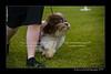 DSC_5489-12x18-07_2014-Dog_Show-W