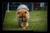 DSC_5588-12x18-07_2014-Dog_Show-W