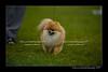 DSC_6197-12x18-07_2014-Dog_Show-W