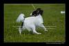 DSC_5293-12x18-07_2014-Dog_Show-W
