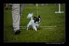 DSC_5298-12x18-07_2014-Dog_Show-W
