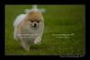 DSC_5935-12x18-07_2014-Dog_Show-W