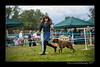 DSC_6335-12x18-07_2014-Dog_Show-W