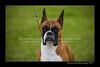 DSC_6406-12x18-07_2014-Dog_Show-W