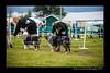 DSC_0795-12x18-07_2014-Dog_Show-W