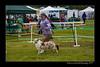 DSC_0787-12x18-07_2014-Dog_Show-W