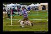 DSC_0785-12x18-07_2014-Dog_Show-W