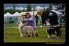 DSC_0793-12x18-07_2014-Dog_Show-W