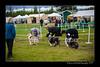 DSC_0792-12x18-07_2014-Dog_Show-W