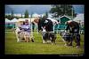 DSC_0794-12x18-07_2014-Dog_Show-W