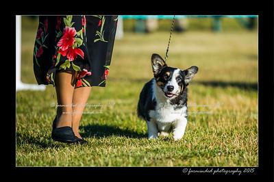 DSC_4094-12x18-07_2015-Dog_Show-W