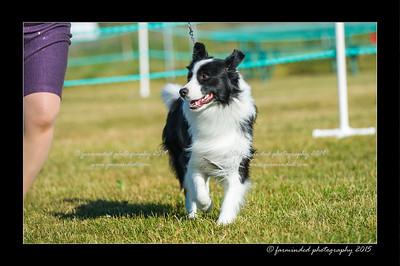 DSC_4179-12x18-07_2015-Dog_Show-W
