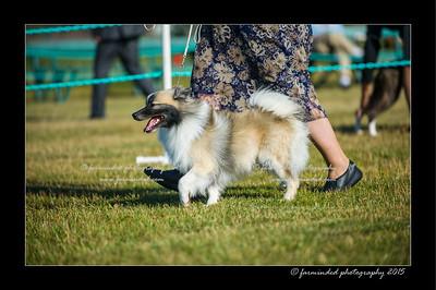 DSC_4202-12x18-07_2015-Dog_Show-W