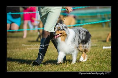 DSC_4310-12x18-07_2015-Dog_Show-W