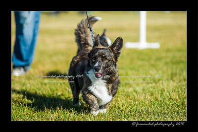 DSC_4114-12x18-07_2015-Dog_Show-W