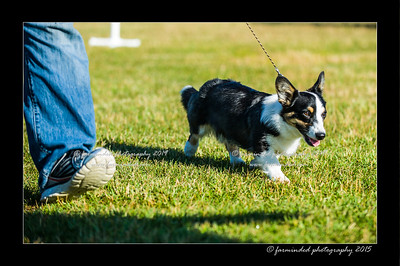 DSC_4117-12x18-07_2015-Dog_Show-W