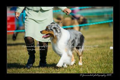 DSC_4311-12x18-07_2015-Dog_Show-W