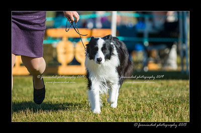 DSC_4165-12x18-07_2015-Dog_Show-W