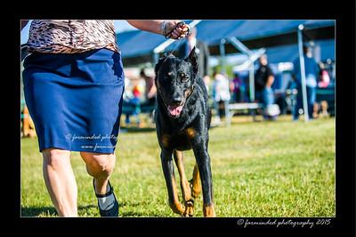 DSC_4131-12x18-07_2015-Dog_Show-W