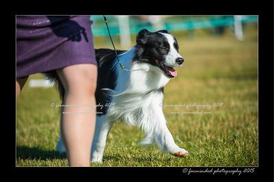 DSC_4180-12x18-07_2015-Dog_Show-W