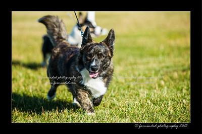 DSC_4115-12x18-07_2015-Dog_Show-W