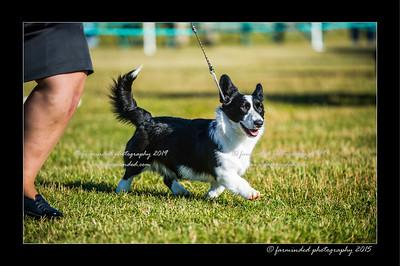 DSC_4093-12x18-07_2015-Dog_Show-W