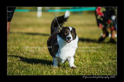 DSC_4102-12x18-07_2015-Dog_Show-W