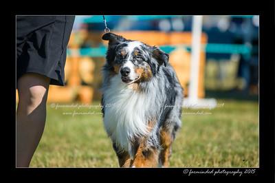 DSC_4321-12x18-07_2015-Dog_Show-W