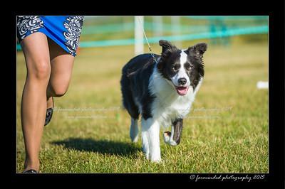 DSC_4176-12x18-07_2015-Dog_Show-W