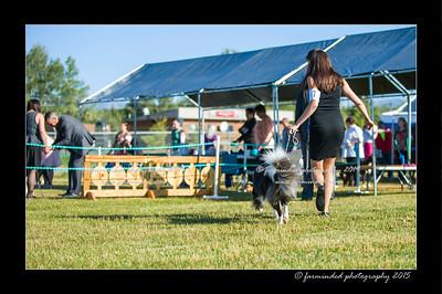 DSC_4152-12x18-07_2015-Dog_Show-W