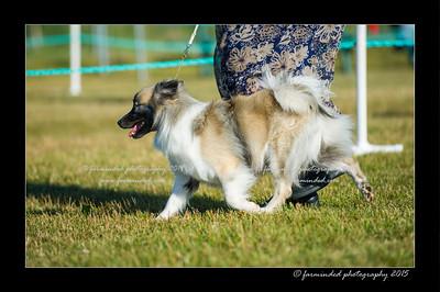 DSC_4203-12x18-07_2015-Dog_Show-W