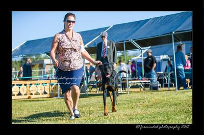 DSC_4128-12x18-07_2015-Dog_Show-W