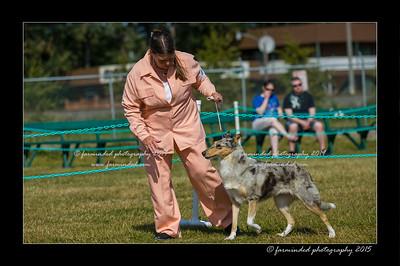 DSC_0148-12x18-07_2015-Dog_Show-W