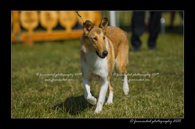 DSC_0144-12x18-07_2015-Dog_Show-W