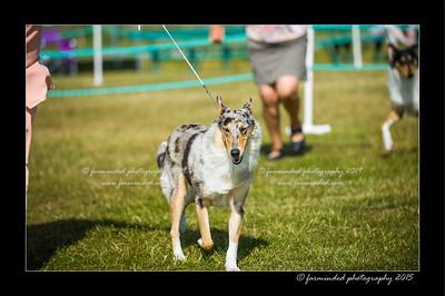 DSC_0149-12x18-07_2015-Dog_Show-W
