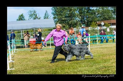 DSC_0021-12x18-07_2015-Dog_Show-W