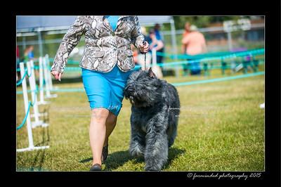 DSC_0117-12x18-07_2015-Dog_Show-W