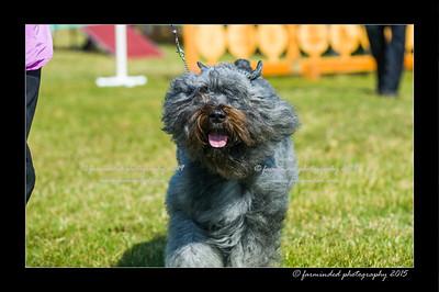 DSC_0017-12x18-07_2015-Dog_Show-W