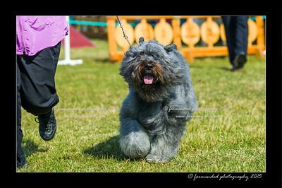 DSC_0015-12x18-07_2015-Dog_Show-W